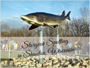 Get Ready for Sturgeon Spotting!