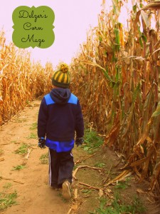 Pumpkins, Hayrides and Corn Mazes, Oh My!