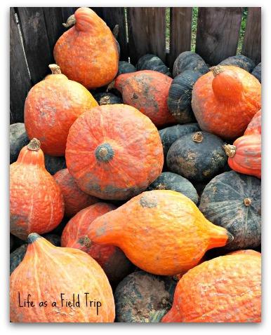 Squash-Oneida-Orchard