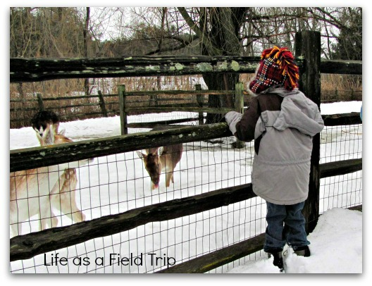 6 Great Winter Outings in Northeast Wisconsin NEW Zoo {Life as a Field Trip}
