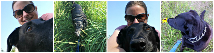 Diary of a Dog Sitter (by a totally under-qualified goldfish owner) {Life as a Field Trip}