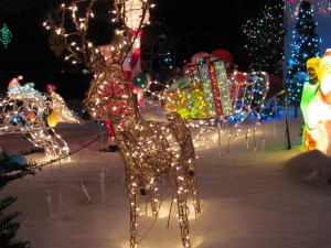 Embrace Winter: Christmas Lights