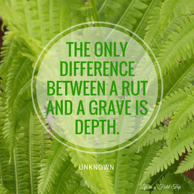 The only difference between a rut and a grave is depth {Life as a Field Trip}