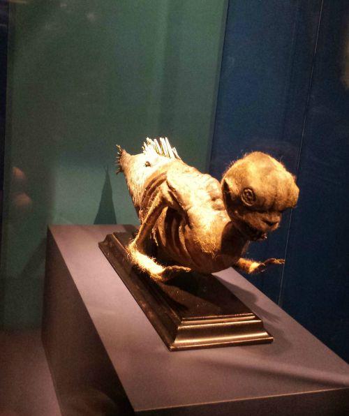 Mythic Creatures Exhibit- Cryptid Case Files: Case File M.05